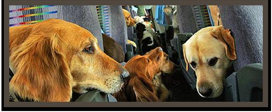 Pes v letalu